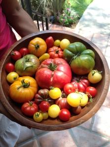 Didi's tomatoes!